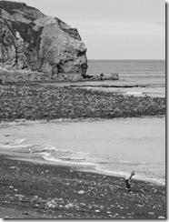 Coastline at Easington by kind permission of Fiona Naughton
